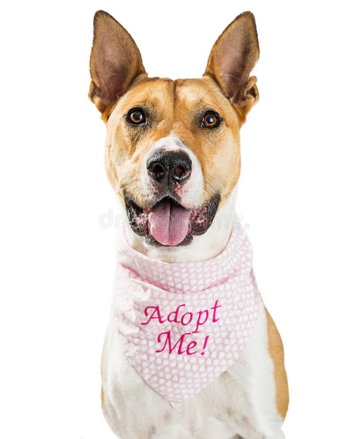 Szczęśliwego ratuneku Psi Być ubranym Adoptuje Ja bandany zdjęcia royalty free