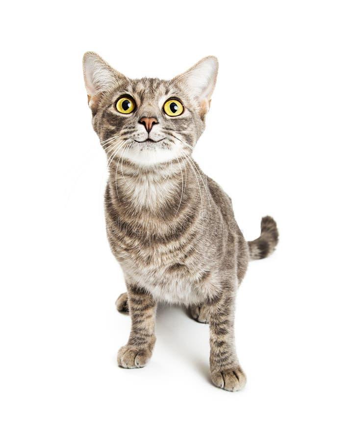 Szczęśliwego Uśmiechniętego Młodego kota Ekspresyjni oczy obrazy stock