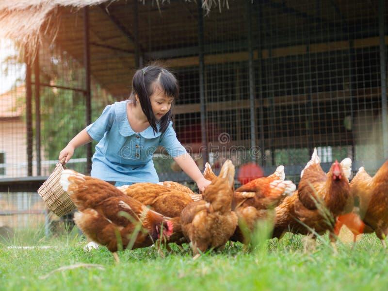 Szczęśliwej małej dziewczynki żywieniowi kurczaki w gospodarstwie rolnym Uprawiać ziemię, zwierzę domowe, brzęczenia zdjęcie stock