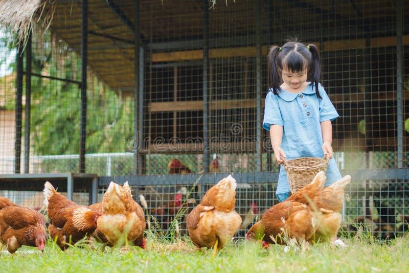 Szczęśliwej małej dziewczynki żywieniowi kurczaki w gospodarstwie rolnym Uprawiać ziemię, zwierzę domowe, brzęczenia obrazy royalty free