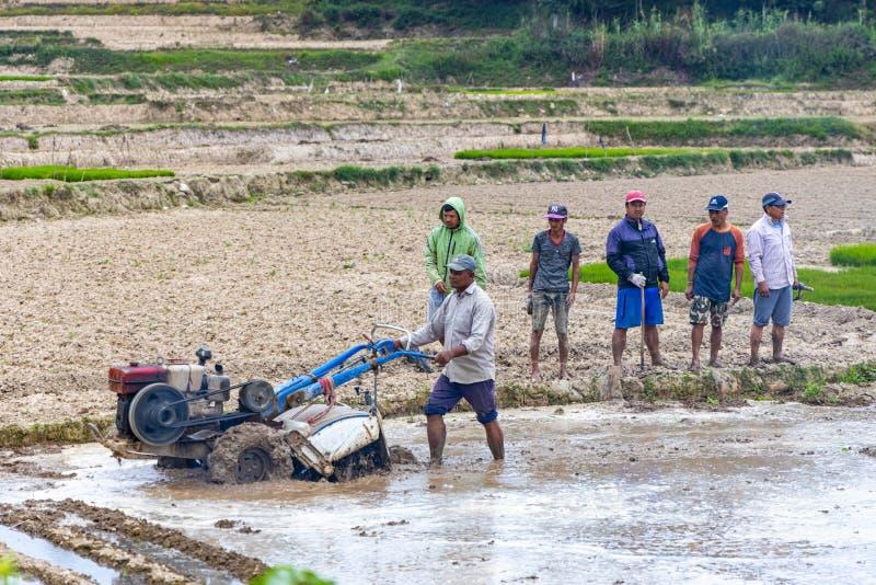 Szczęśliwi Azjatyccy rolnicy przeorze pole zdjęcia royalty free