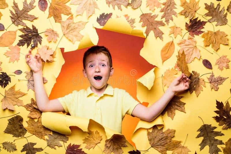 Szczęśliwi dzieci w jesieni Szczęśliwa śliczna mądra chłopiec Portret piękny szczęśliwy rudzielec chłopiec zakończenie Jesień cza obrazy royalty free