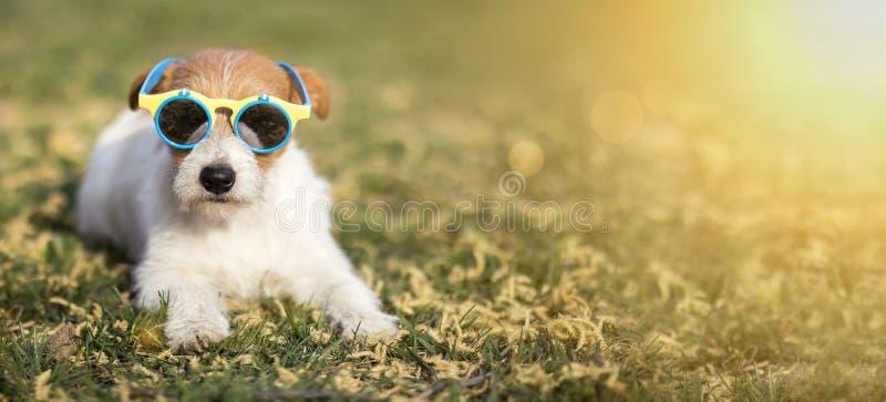 Szczęśliwy śmieszny zwierzę domowe pies jest ubranym okulary przeciwsłonecznych, lato zabawy pojęcia sieci sztandar zdjęcie stock