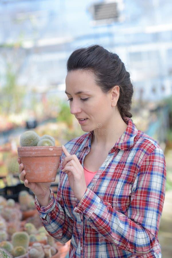 Szczęśliwy żeński pepiniera właściciel z garnkiem kwitnie wśrodku szklarni zdjęcie stock