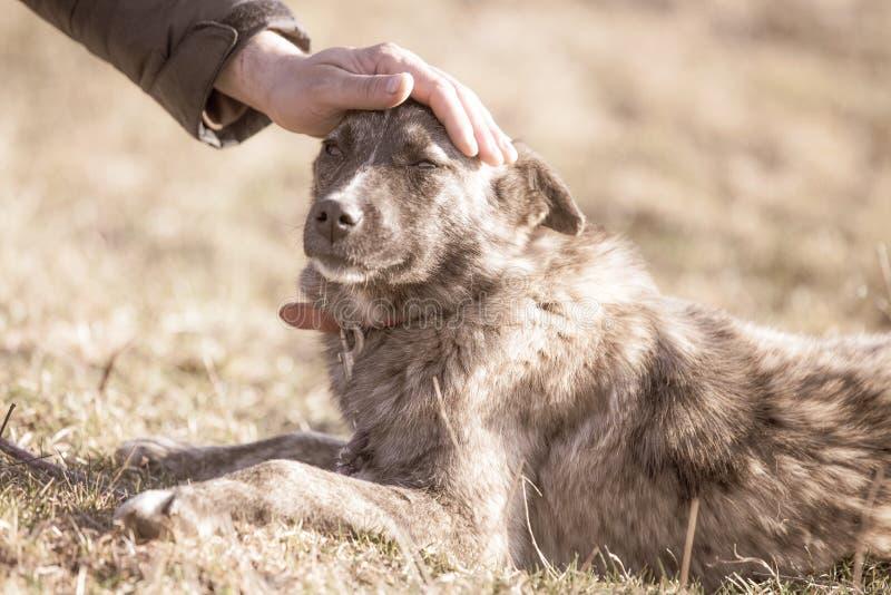 Szczęśliwy adoptowany przybłąkany pies, adoptuje no robi zakupy zdjęcie stock