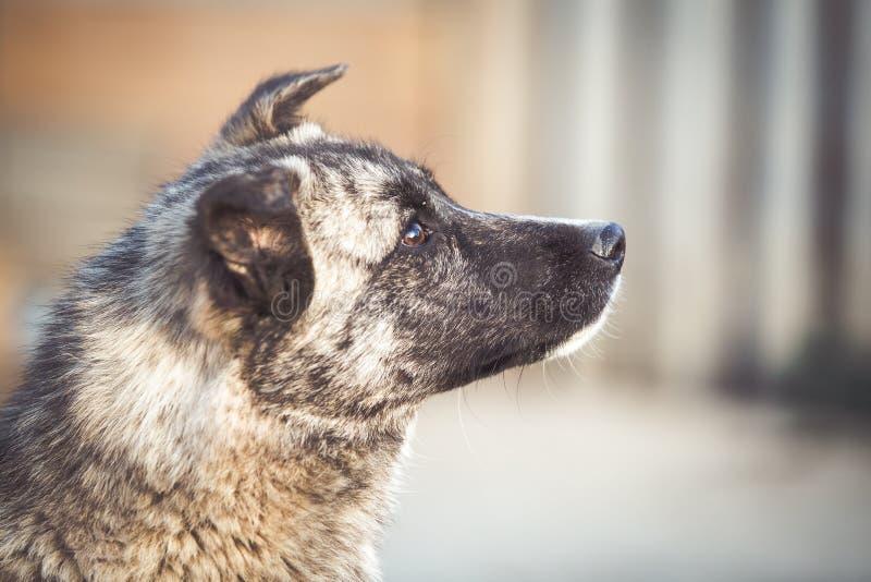 Szczęśliwy adoptowany przybłąkany pies, adoptuje no robi zakupy obrazy stock