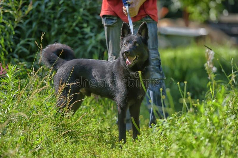 Szczęśliwy czarny pies g na trawy tle fotografia royalty free