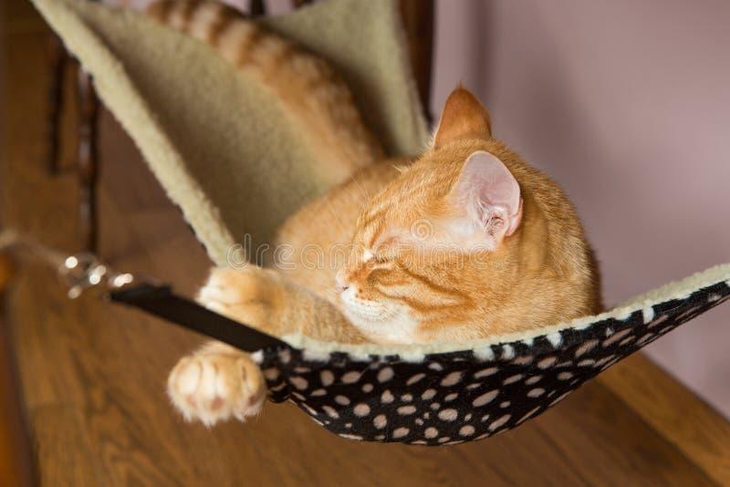 Szczęśliwy czerwony kota sen w futerkowym hamaku obrazy royalty free