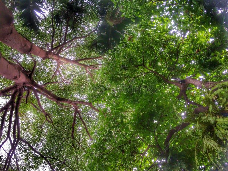 szczęśliwy drzewo zdjęcie stock