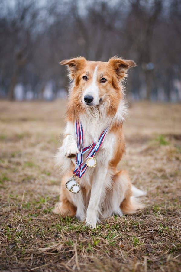 Szczęśliwy dumny pies wiele medale zdjęcia royalty free