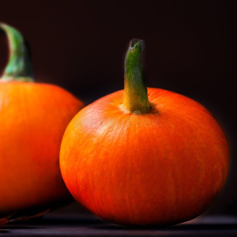 Szczęśliwy dziękczynienie dnia tło - pomarańczowe banie nad drewnianym obraz royalty free