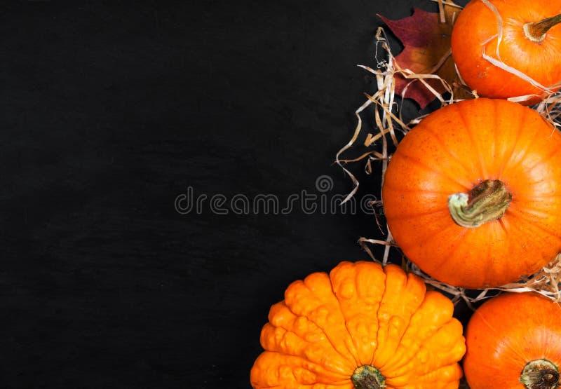 Szczęśliwy dziękczynienie - jesieni Pomarańczowe banie nad czarnym backgroun obraz stock