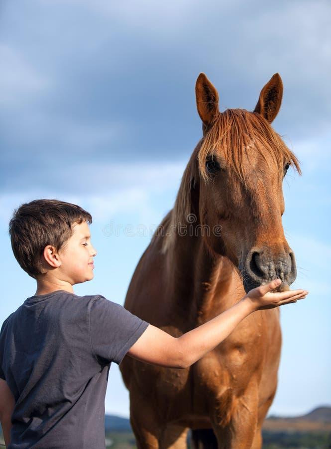 Szczęśliwy dziecko karmi głodnego i honorowo konia zdjęcia stock