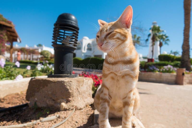 Szczęśliwy imbirowy kota obsiadanie na hotelach drogowych obraz stock