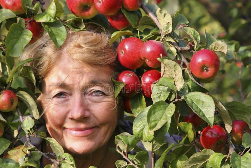 Szczęśliwy Jabłczany Zbieracz obraz royalty free