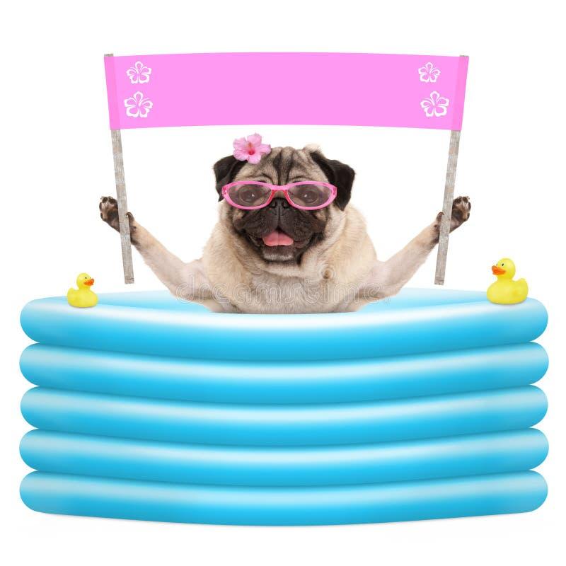 Szczęśliwy lato mopsa pies z okularami przeciwsłonecznymi i puste miejsce różowym sztandarem podpisuje wewnątrz nadmuchiwanego po fotografia stock