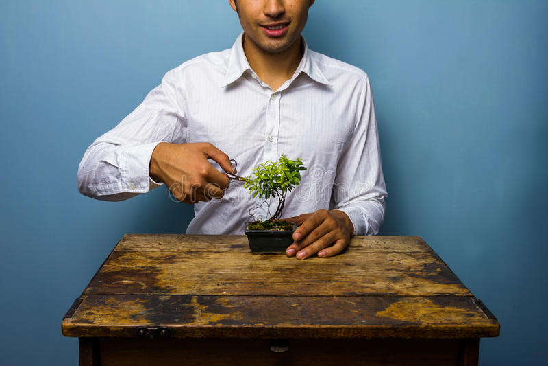 Szczęśliwy mężczyzna przycina jego bonsai drzewa obrazy stock