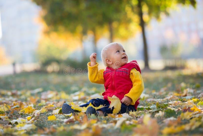 Szczęśliwy małe dziecko, chłopiec śmia się i bawić się w jesieni, fotografia stock