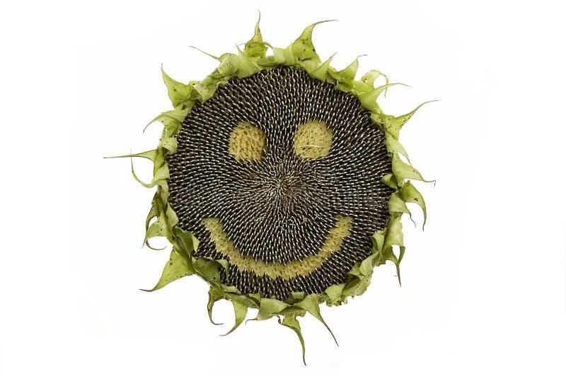 szczęśliwy odosobniony słonecznik fotografia royalty free
