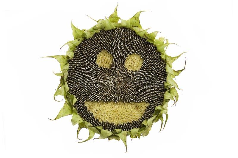 szczęśliwy odosobniony słonecznik obrazy stock