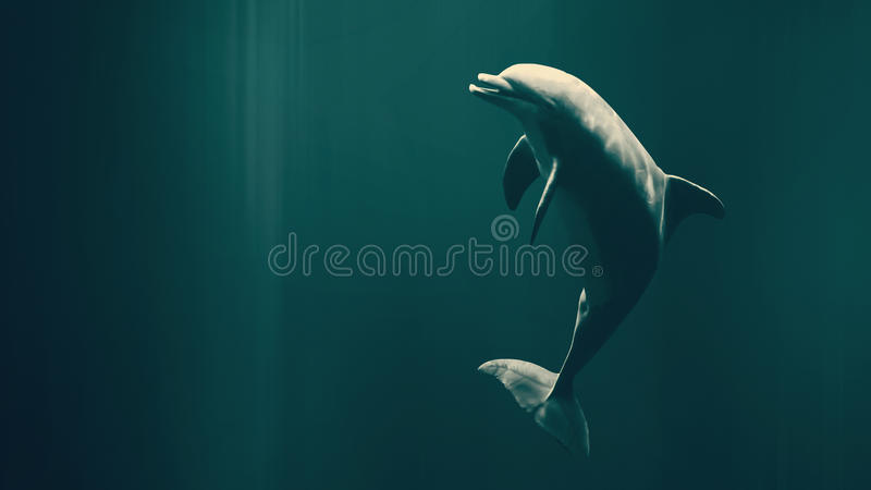 Szczęśliwy pływacki delfin zdjęcia stock