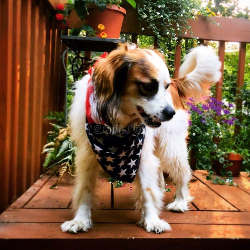 Szczęśliwy pies zdjęcie royalty free