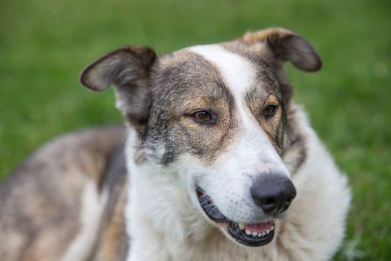 Szczęśliwy pies kłaść na gazonie w ogródzie na lata ono uśmiecha się i słonecznym dniu obraz stock