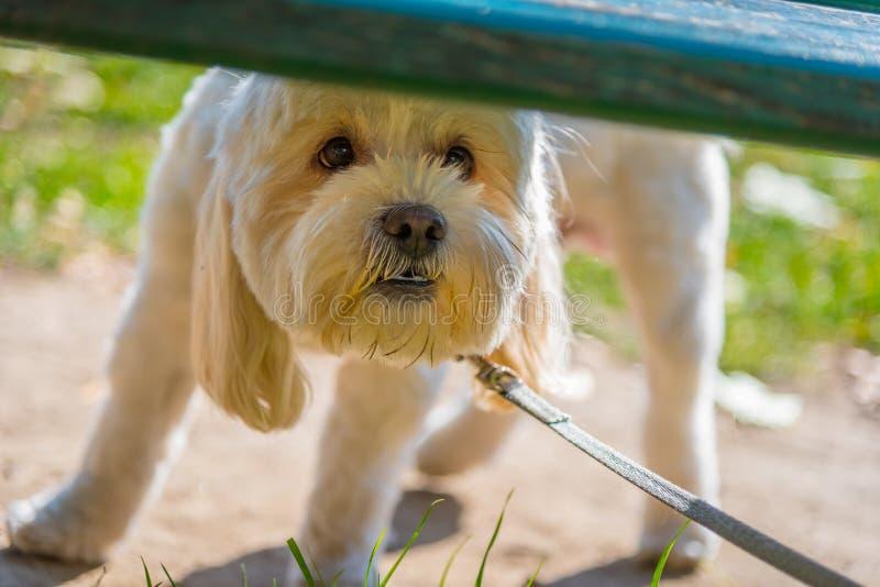 Szczęśliwy pies pod banch obrazy royalty free
