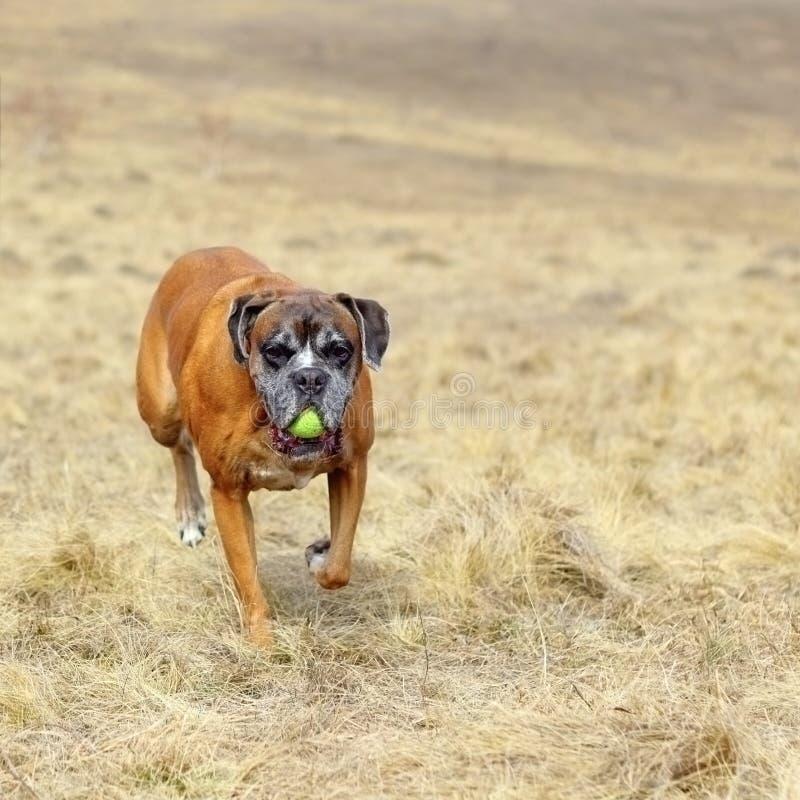 Szczęśliwy pies w segreguję fotografia royalty free