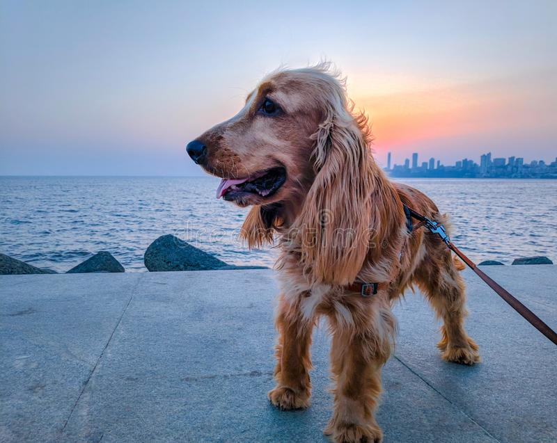 szczęśliwy pies w ten okrutnym świacie zdjęcia royalty free