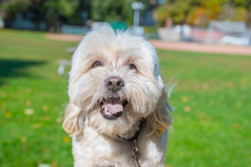 Szczęśliwy psi bieg w parku zdjęcie royalty free