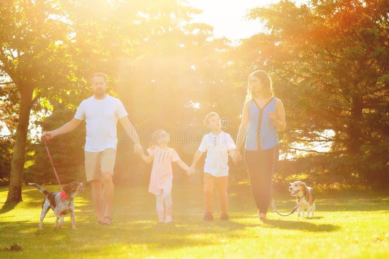 Szczęśliwy rodzinny odprowadzenie z psami w słonecznym dniu obraz royalty free