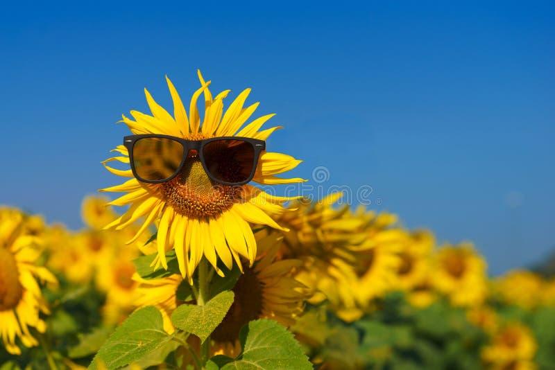 szczęśliwy słonecznik na dnia południu z niebieskiego nieba abstrakcjonistycznym tłem zdjęcie royalty free