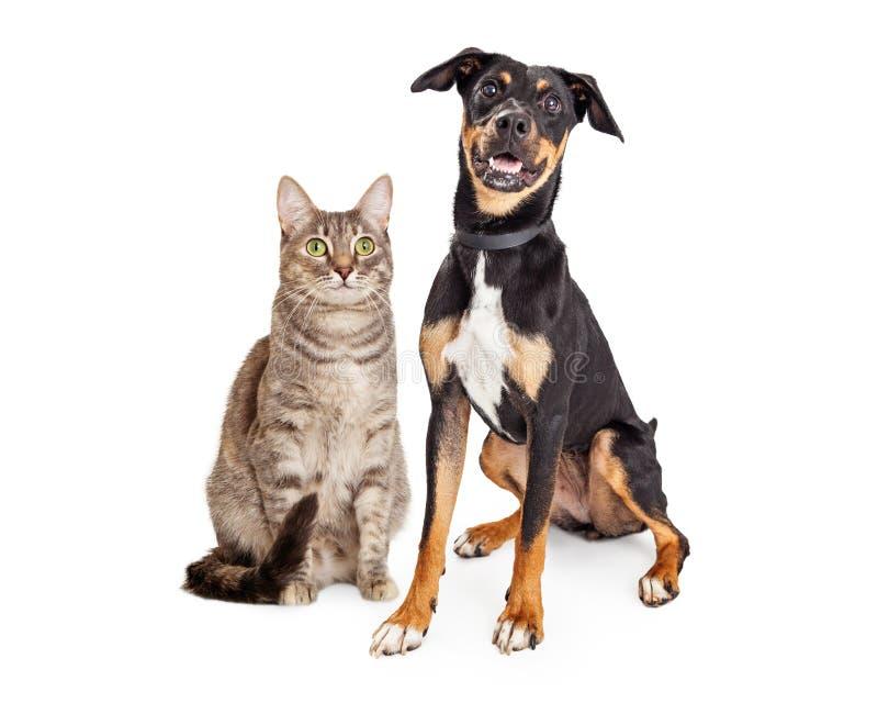 Szczęśliwy Uśmiechnięty Tabby kot i Crossbreed pies zdjęcie stock