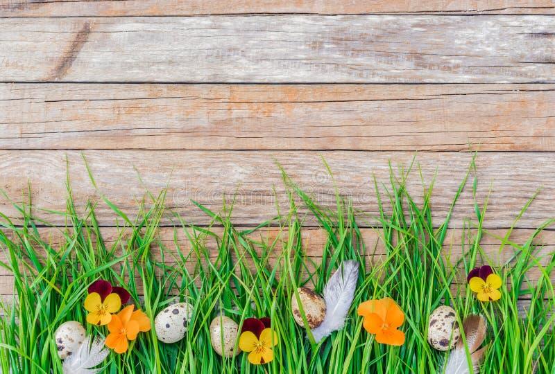 Szczęśliwy Wielkanocny tło z kwiatami, Easter jajkami i zieloną trawą na nieociosanym drewnie z tekst przestrzenią, fotografia royalty free