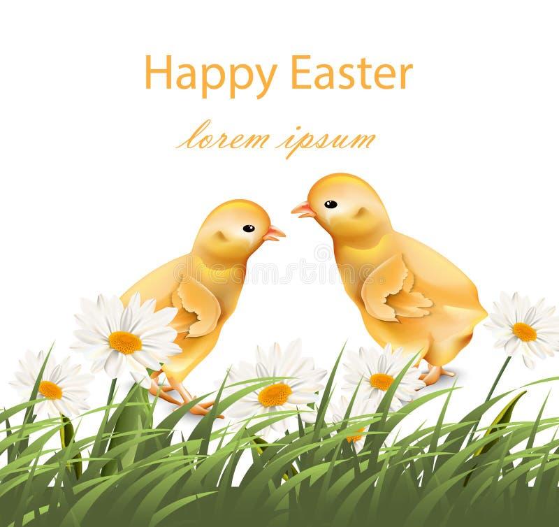 Szczęśliwych Wielkanocnych kurczaków karciany wektor Chamomile śródpolny tło ilustracji