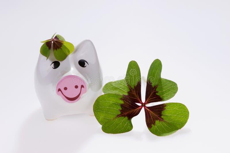 Szczęsliwa urok świnia z cztery liści koniczyną zdjęcia stock