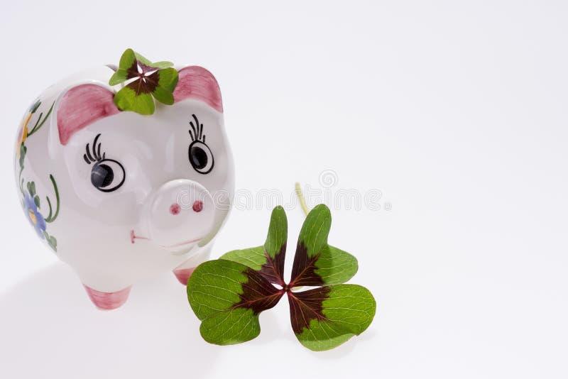 Szczęsliwa urok świnia z cztery liści koniczyną zdjęcie stock