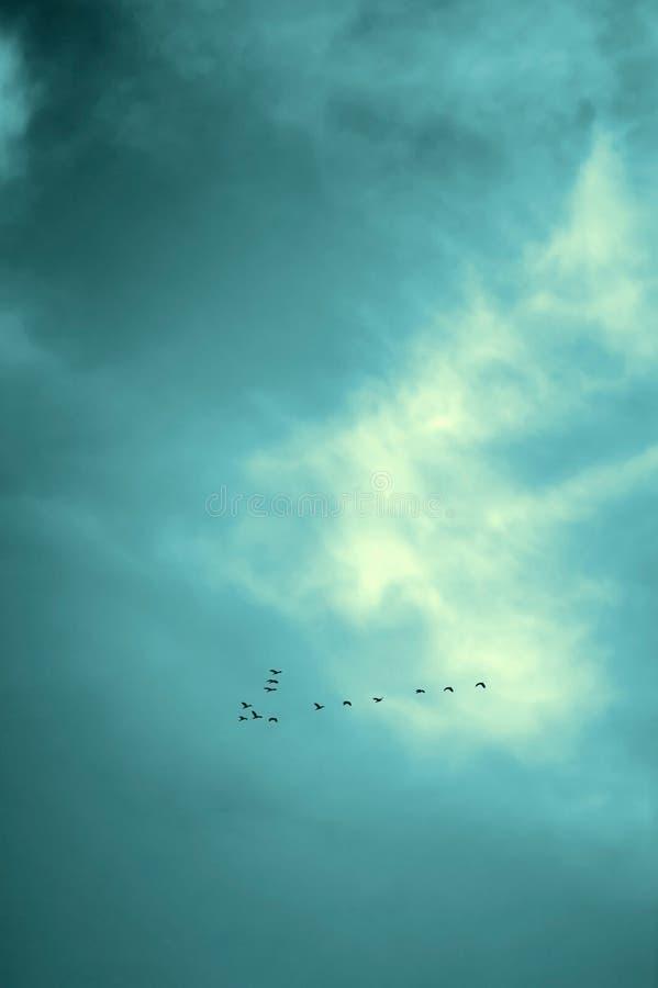 Szczęsliwy żadny ptaki lata w niebie, czarnym zdjęcie royalty free