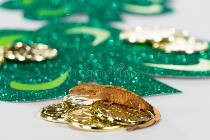 Szczęsliwy gekon złoto zdjęcia royalty free