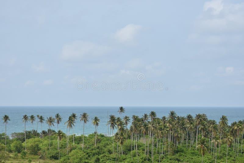 Szczęsliwy kokosowy drzewo obraz royalty free