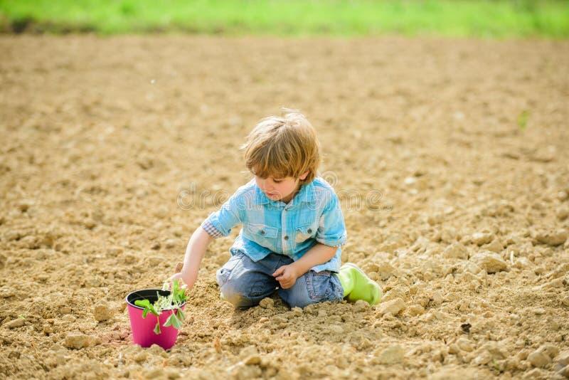 Szcz??liwa dziecko ogrodniczka Botaniczny pracownik grodowa cesky dziedzictwa krumlov sezonu wiosna przegl?da? ?wiat br?zowi? dzi obraz royalty free