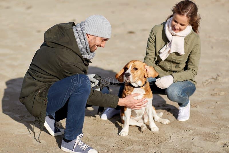 Szcz??liwa para z beagle psem na jesieni pla?y obraz royalty free