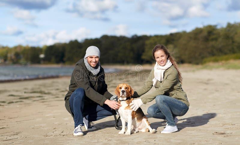 Szcz??liwa para z beagle psem na jesieni pla?y obrazy stock