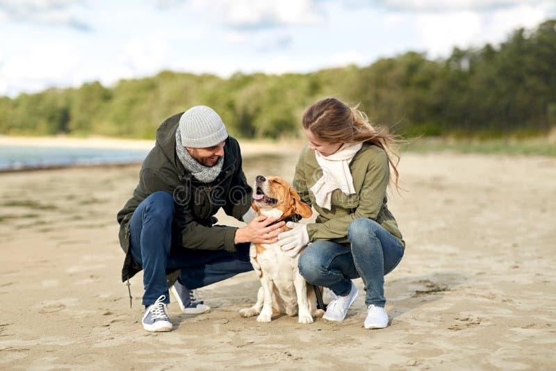 Szcz??liwa para z beagle psem na jesieni pla?y zdjęcie stock