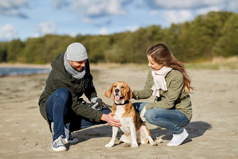 Szcz??liwa para z beagle psem na jesieni pla?y fotografia royalty free