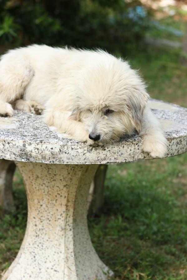 Szcz??liwy pies w ogr?dzie zdjęcia stock