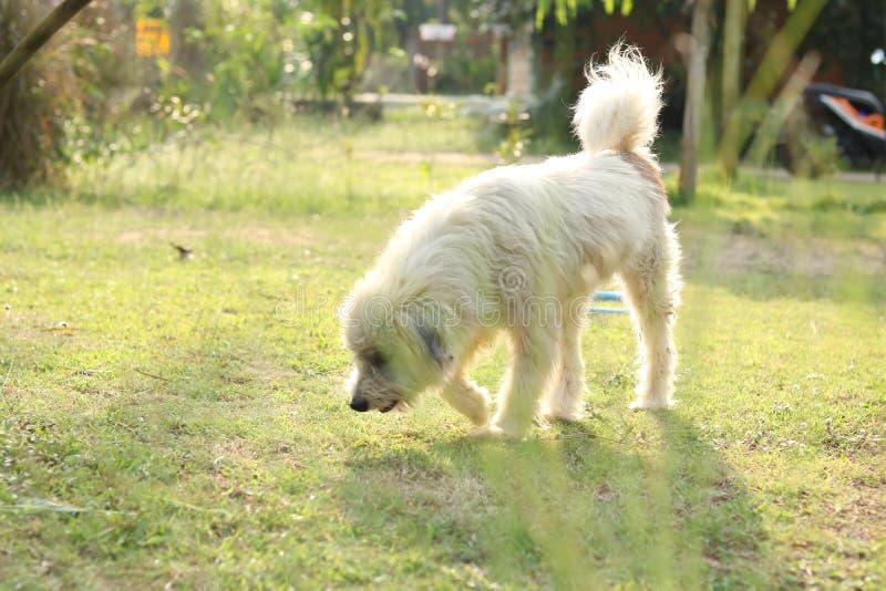 Szcz??liwy pies w ogr?dzie fotografia royalty free