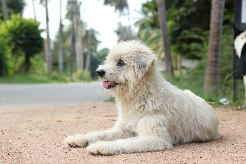 Szcz??liwy pies w ogr?dzie obraz royalty free