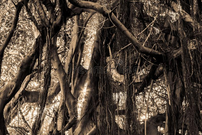 Szczegółu koloru pojedyncza dżungla z sunning błyskawicę obraz royalty free